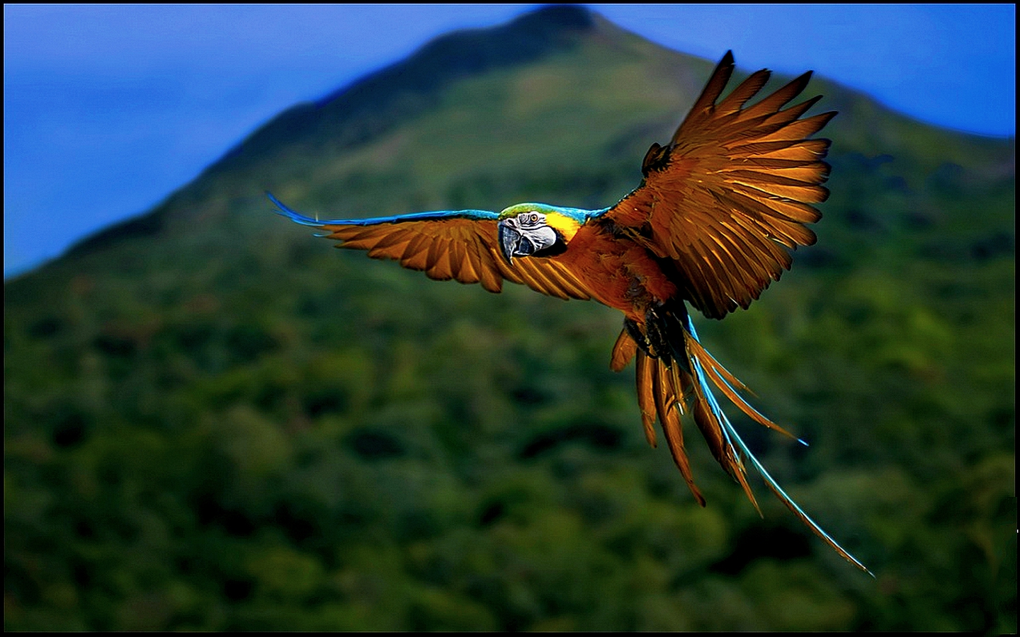 Flying Macaw Wallpaper photo and wallpaper All Flying Macaw Wallpaper 1440x900