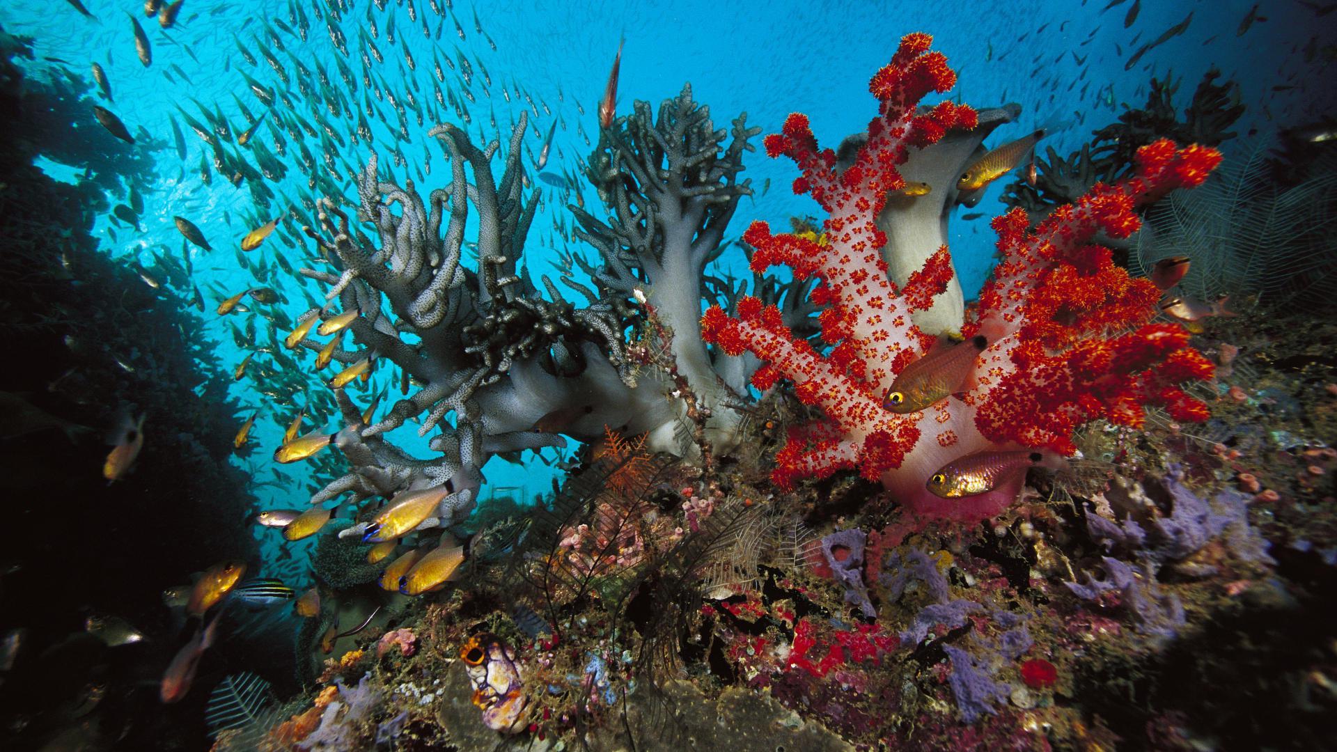 coral reef wallpaper in hd wallpapersafari
