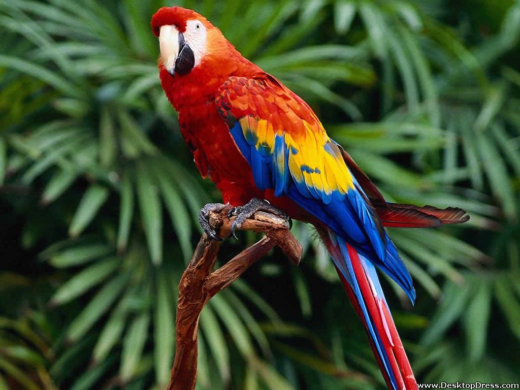 Desktop Wallpapers Animals Backgrounds Hello Parrot www 1024x768