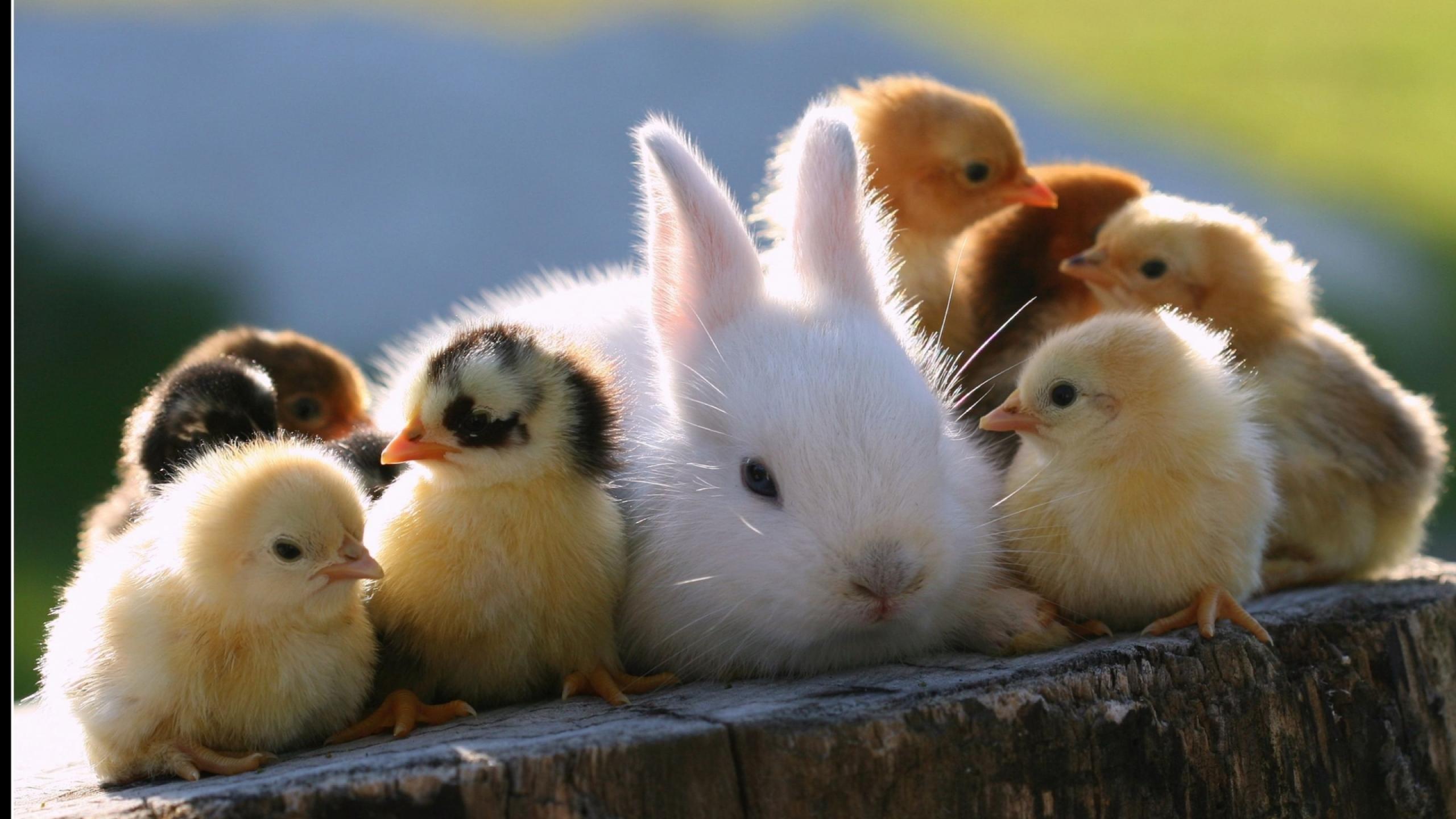 Cute baby animal wallpaper   1219074 2560x1440