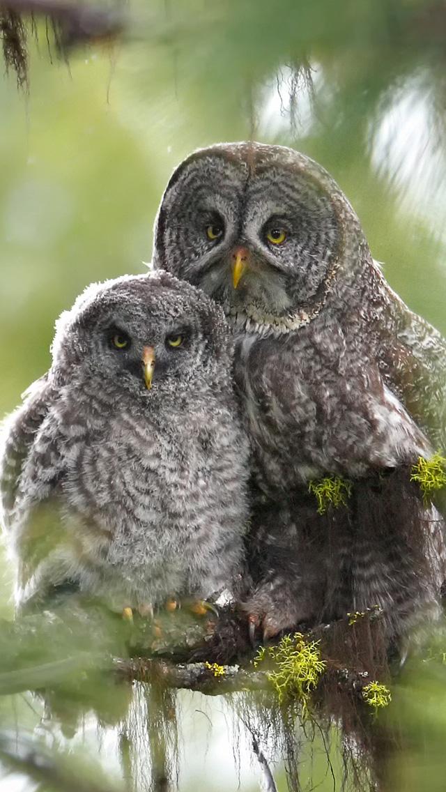 [47+] Cute Owl iPhone Wallpapers on WallpaperSafari