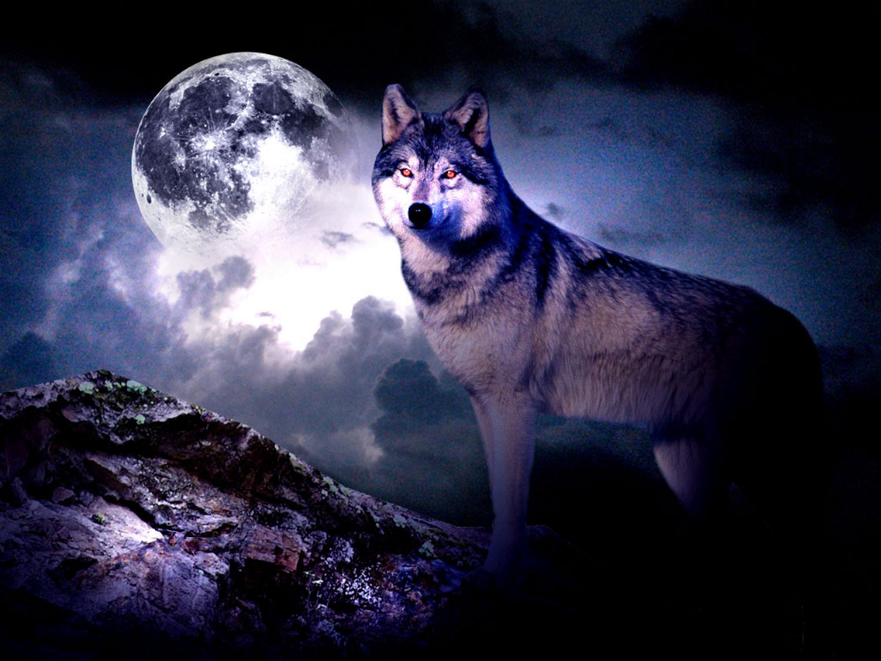 Wolf Moon Wallpaper 11056 Hd Wallpapers in Animals   Imagescicom 1280x960