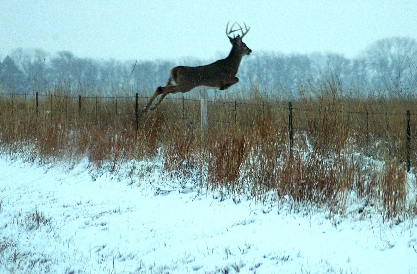 Whitetail Deer Wallpaper Whitetail Deer Backgrounds for PC HD 1600x1050