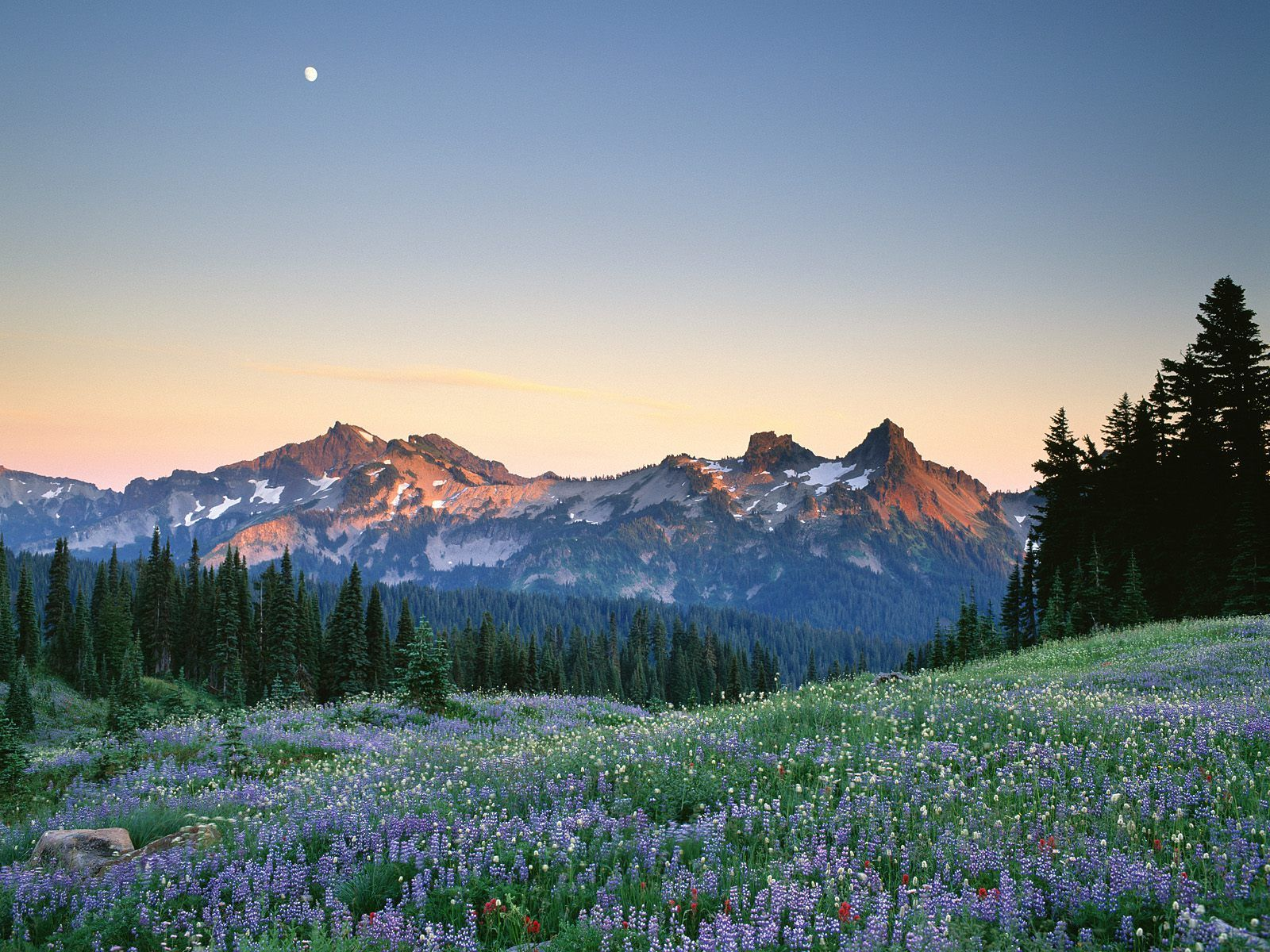huda huda id shopping label mount rainier mountain nature wallpaper 1600x1200