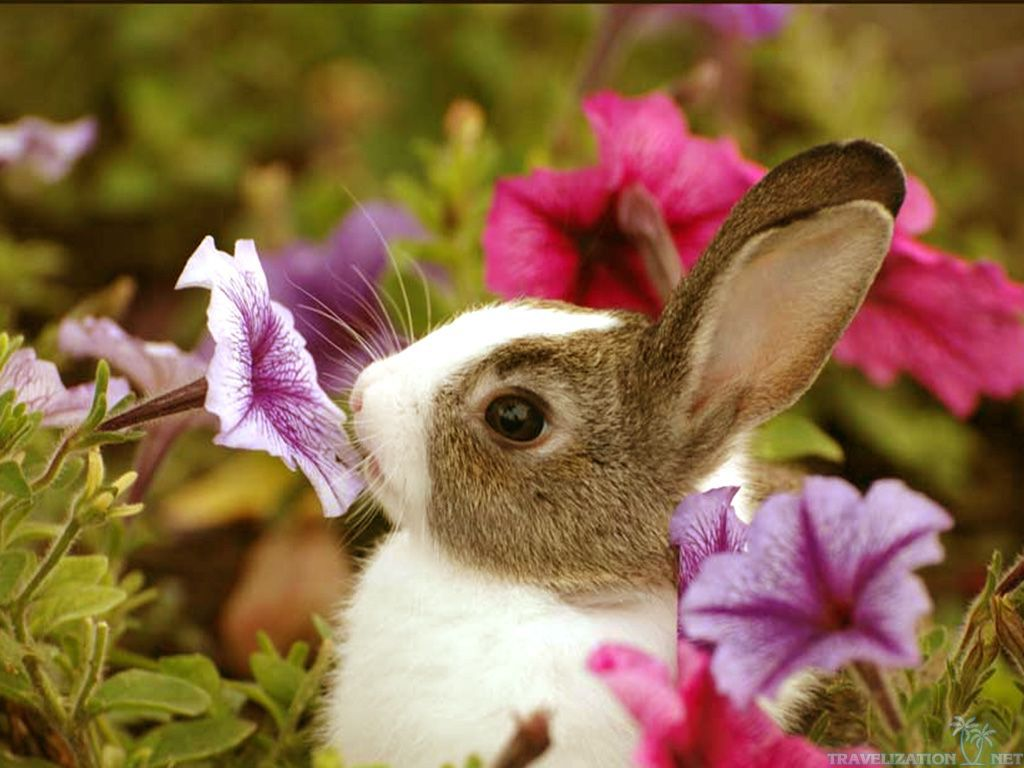 wallpaper1024x768cute baby bunny and flowers animals wallpapers 1024x768