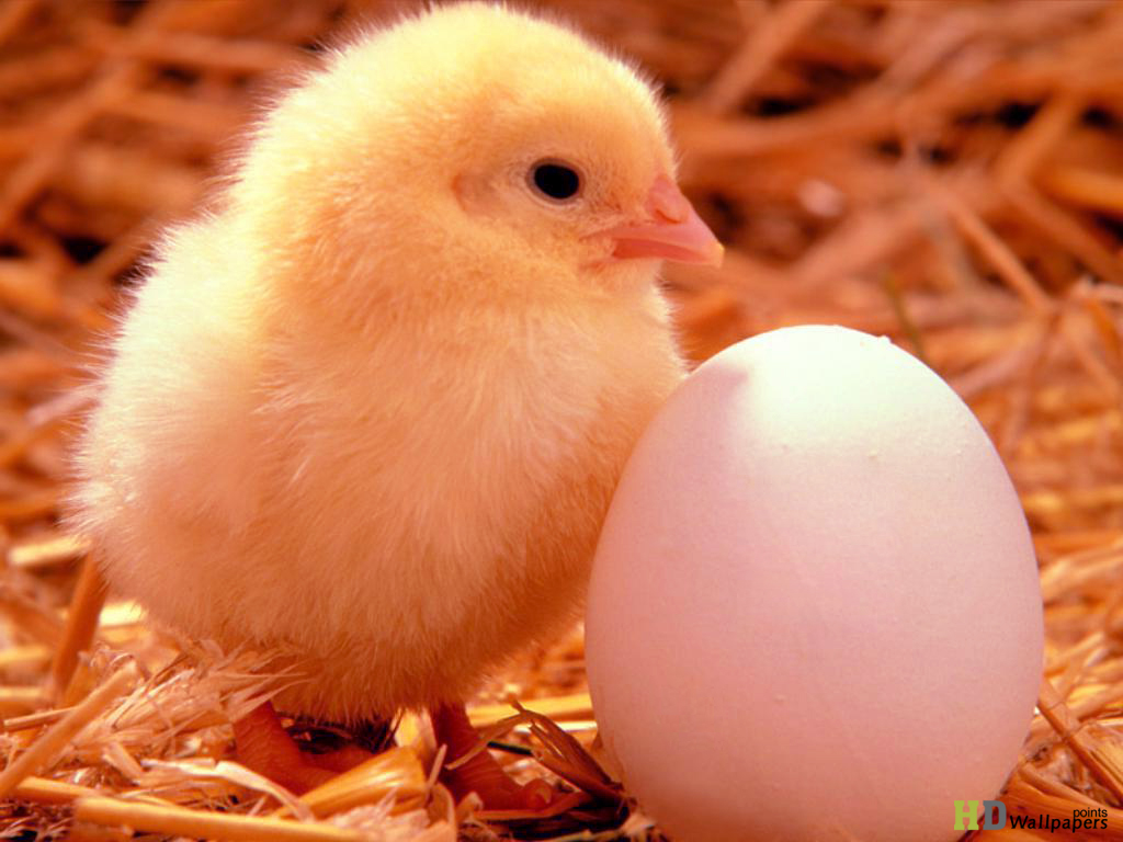 Happy Easter Egg day Desktop Backgrounds 1024x768