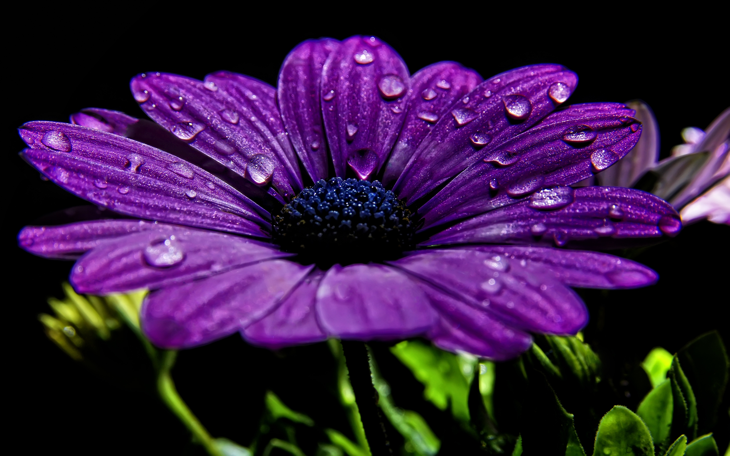 Aesthetic Flower Wallpaper Purple