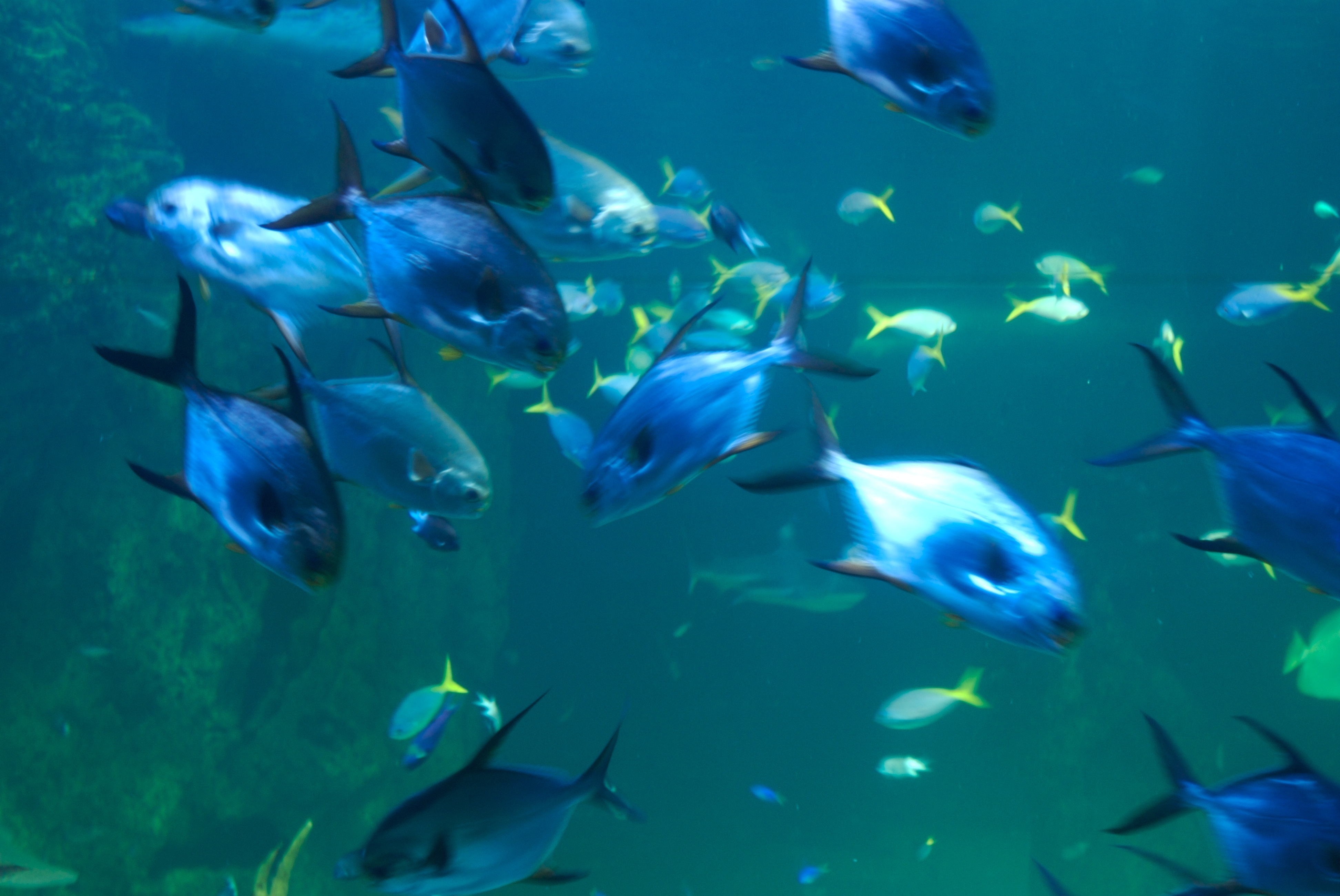 Cool Fish Backgrounds - WallpaperSafari
