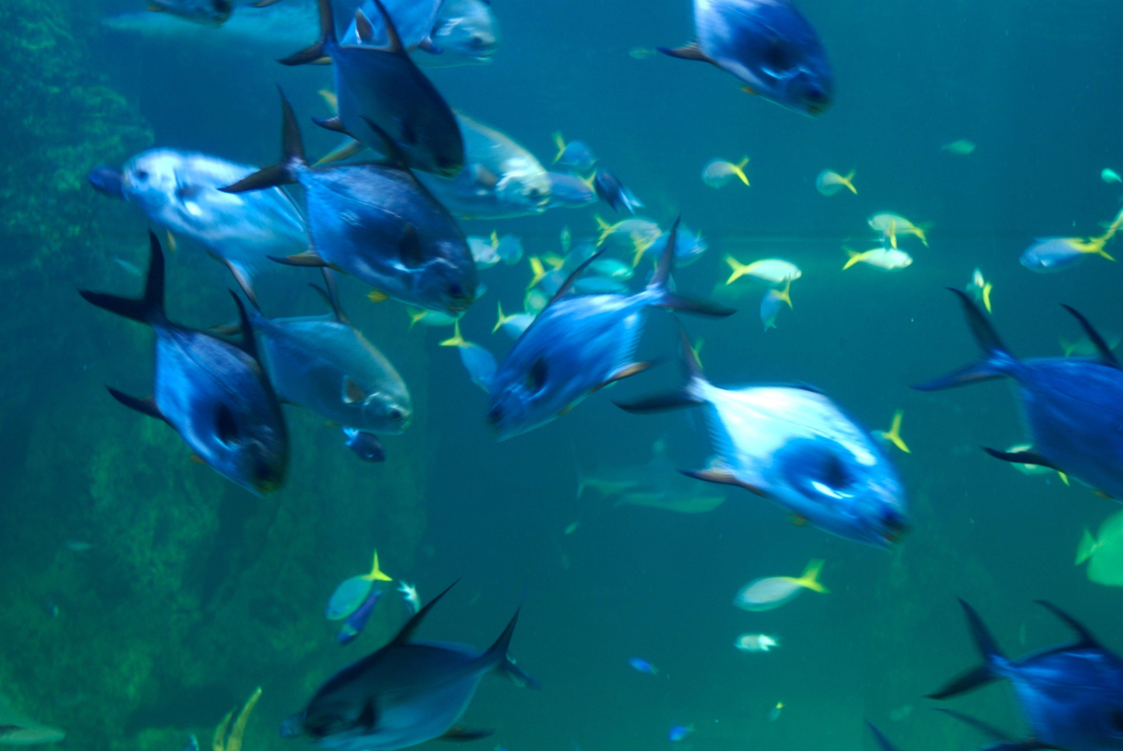 Cool fish backgrounds wallpapersafari for Cool fishing wallpapers