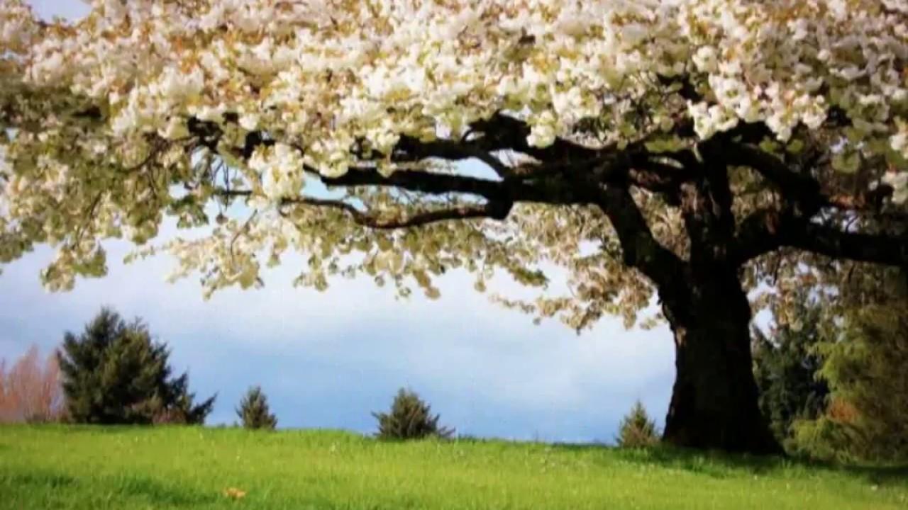 Beautiful Nature Desktop Backgrounds Status Wallpapers 1280x720