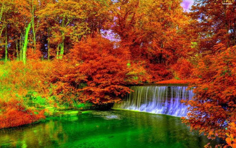 copper color autumn wallpaper description download forest copper color 800x500