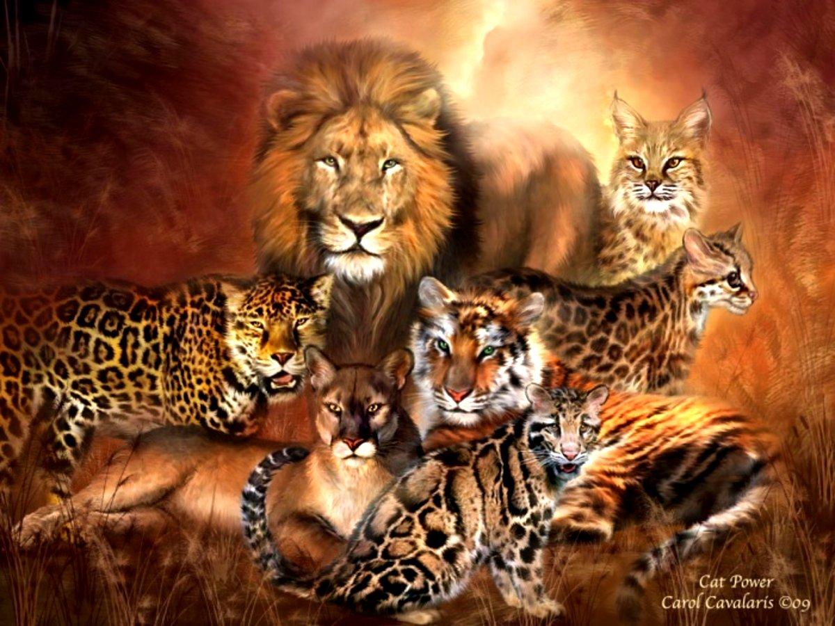 Wild animals images