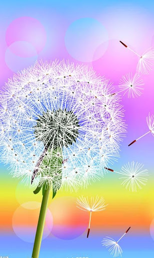 Go Back Gallery For Samsung Galaxy Dandelion Wallpaper 307x512