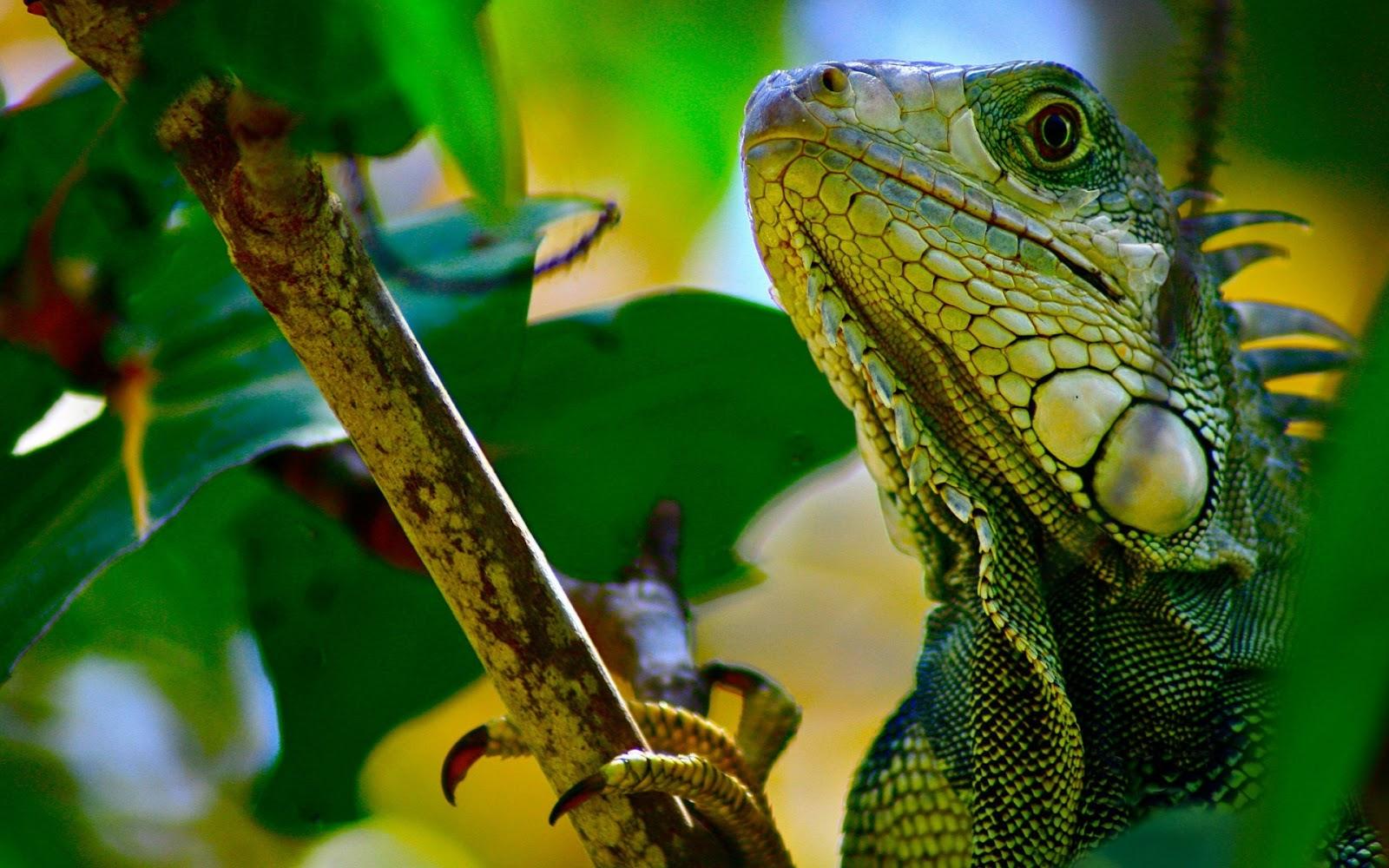 Reptile Wallpaper Wallpapersafari