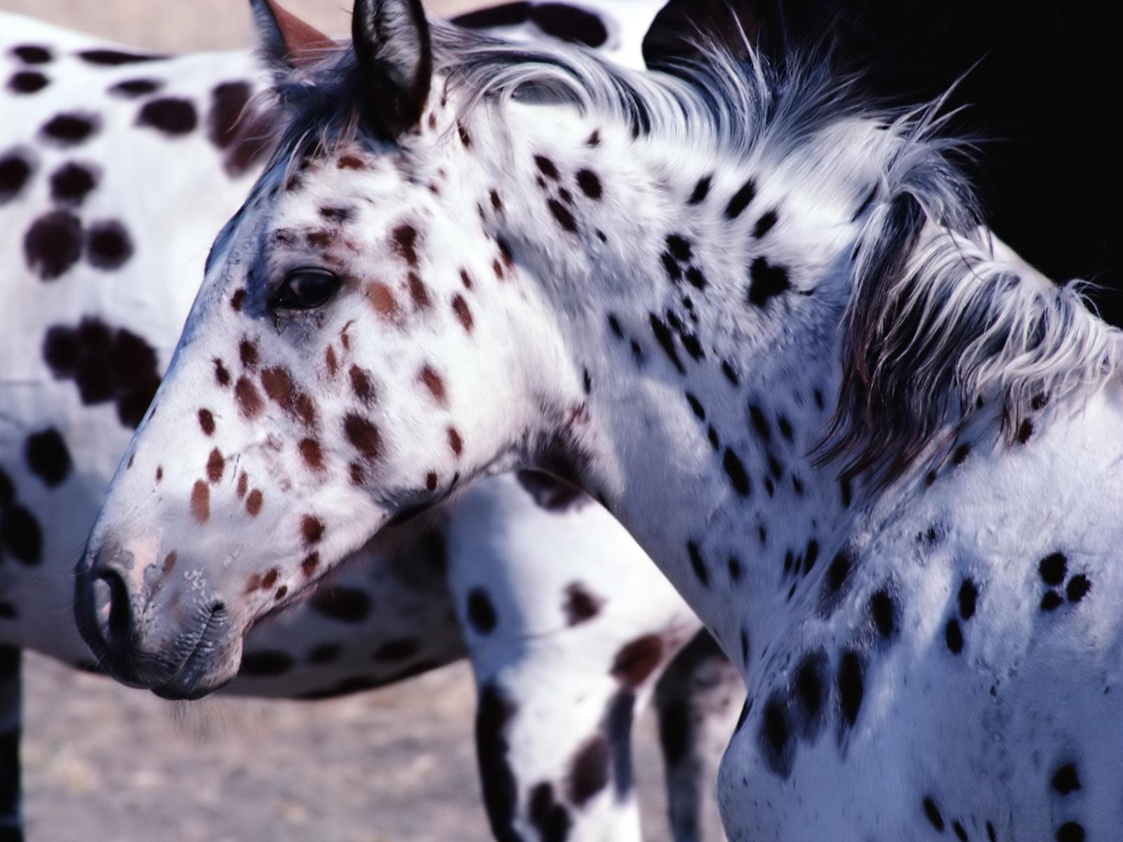 HD Animals Wallpapers Horses Wallpapers for Desktop 1600x1200