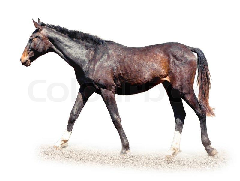 Horse White Background Wallpapersafari