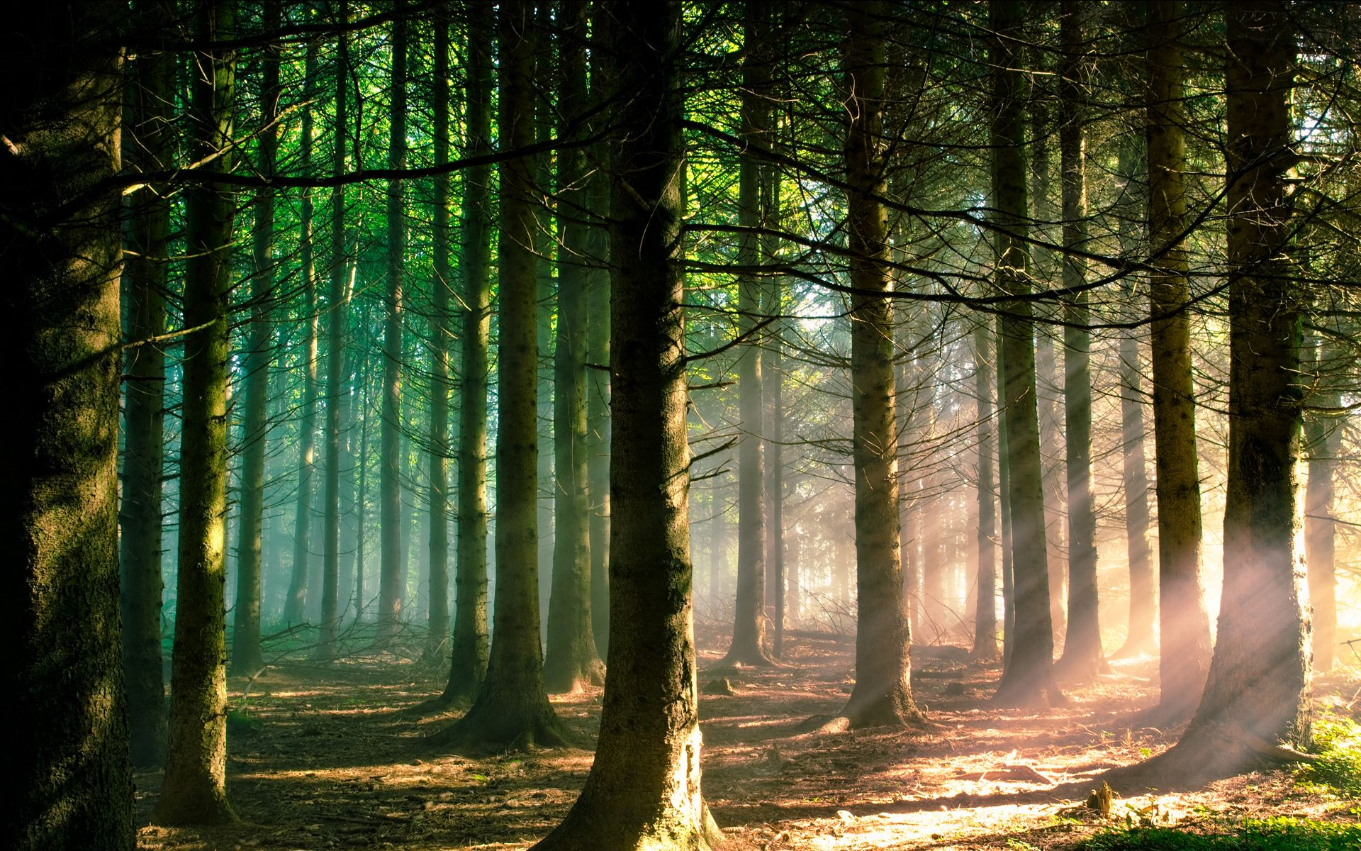 Forest Wall Paper wallpaper trees forest - wallpapersafari