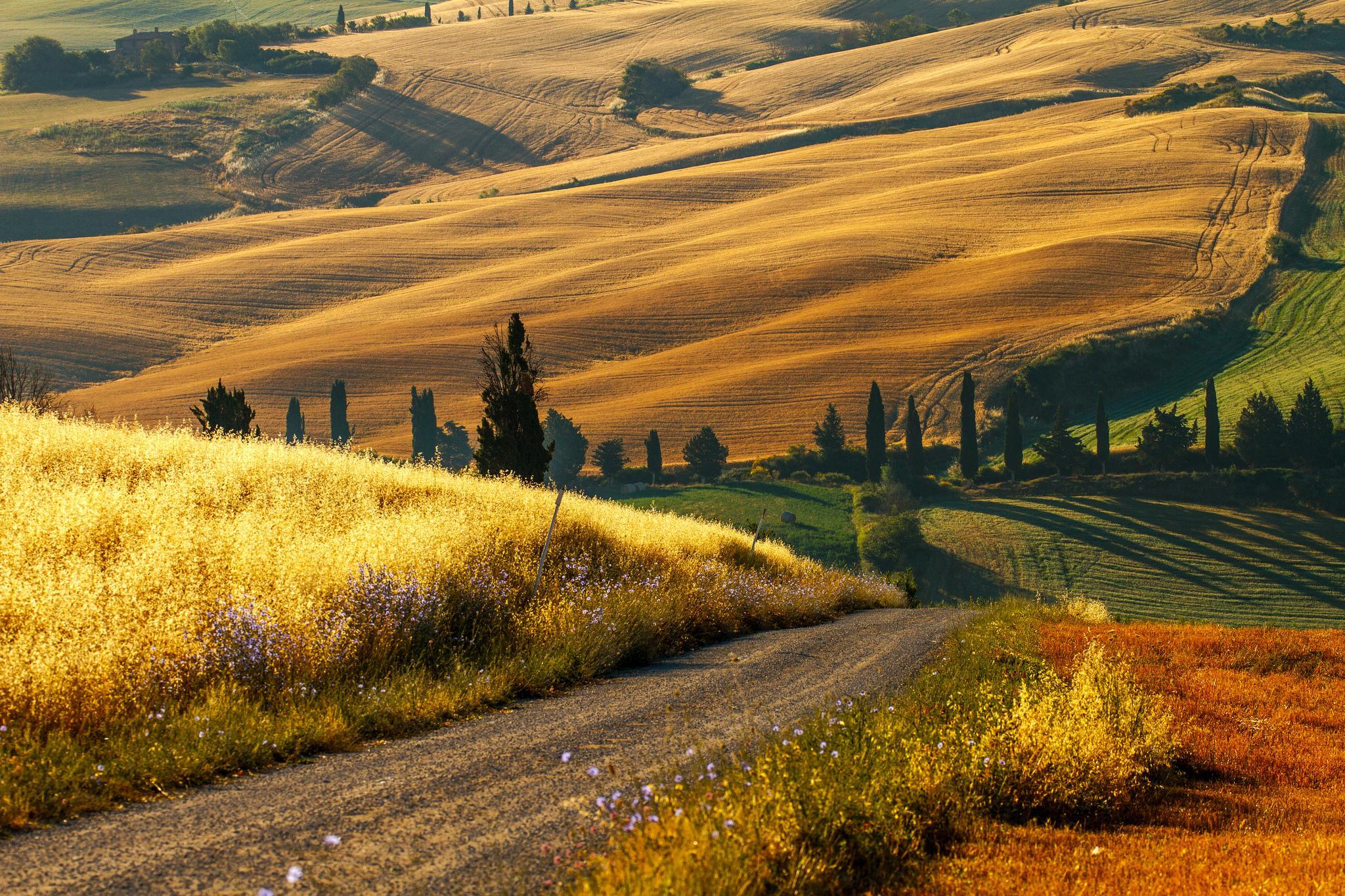 Italy countryside wallpaper wallpapersafari for Countryside wallpaper for walls