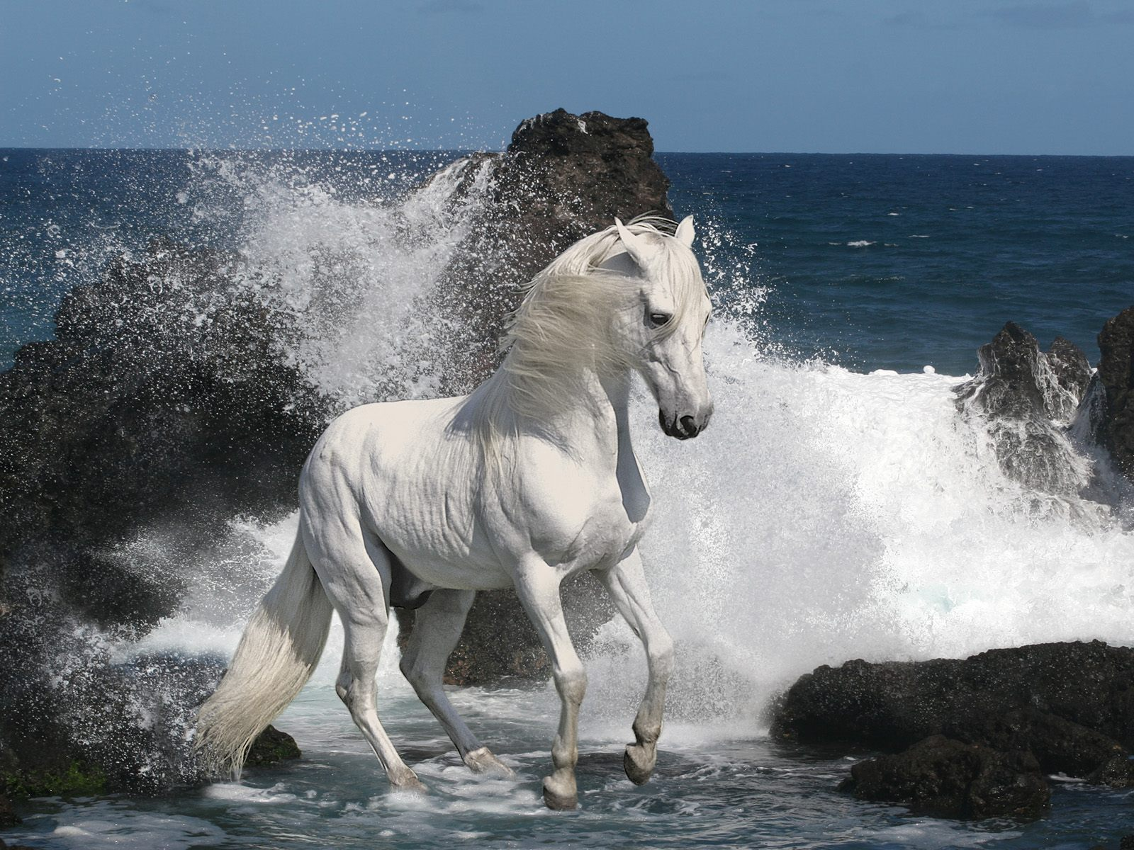 Free Download Beautiful Cute White Coloured Horse Pictures Photos