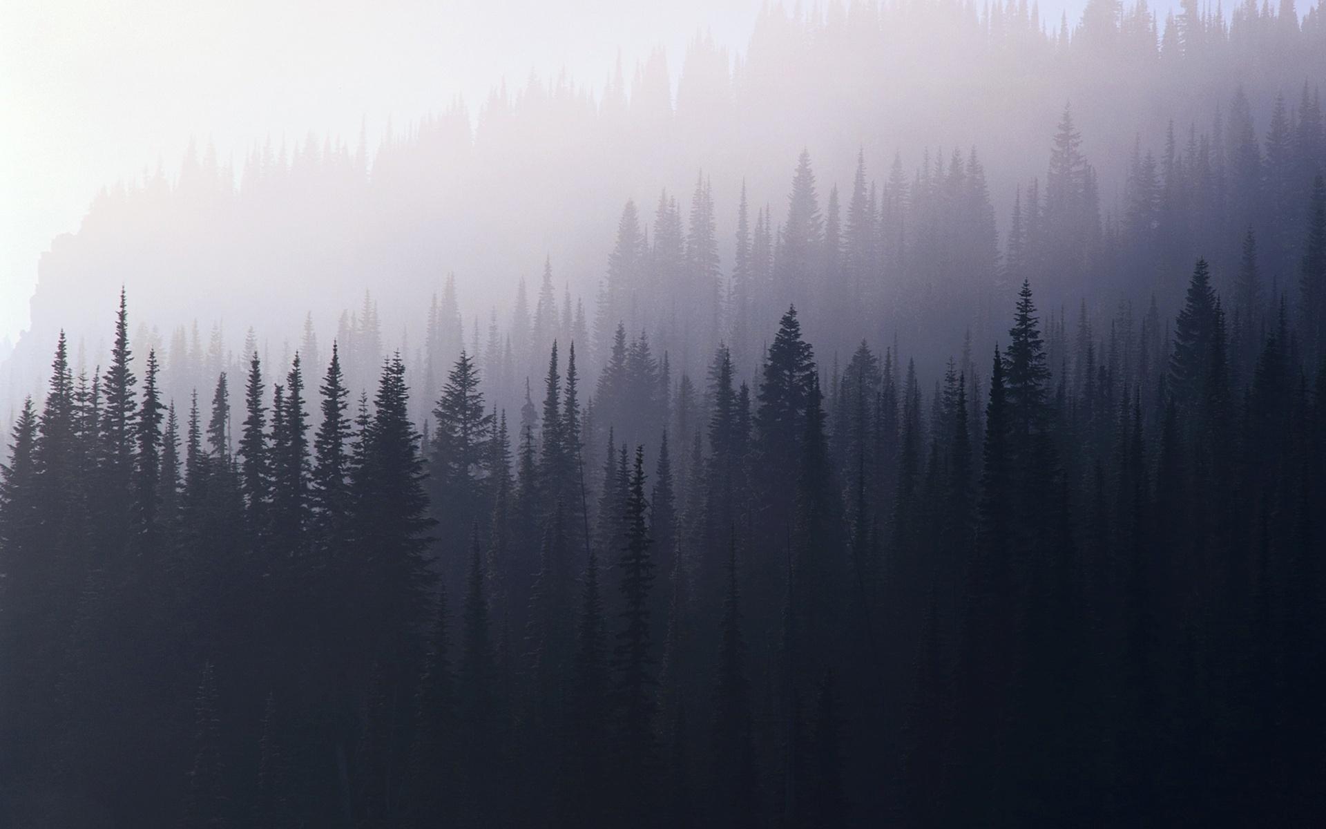 Foggy forest Wallpaper 24489 1920x1200