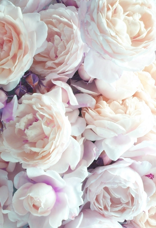 flower photography on Tumblr 500x731