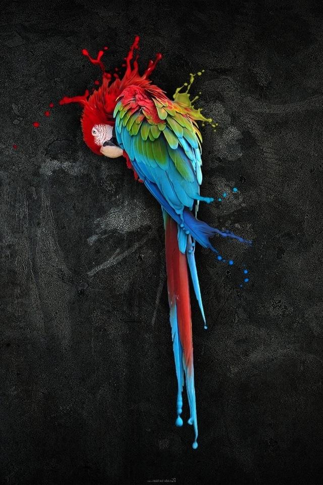 Amazing Parrot Art IPhone HD Wallpaper IPhone HD Wallpaper Download 640x960