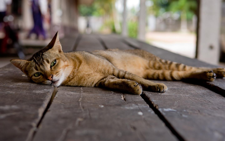 Cat on floor Desktop wallpapers 1440x900 1440x900
