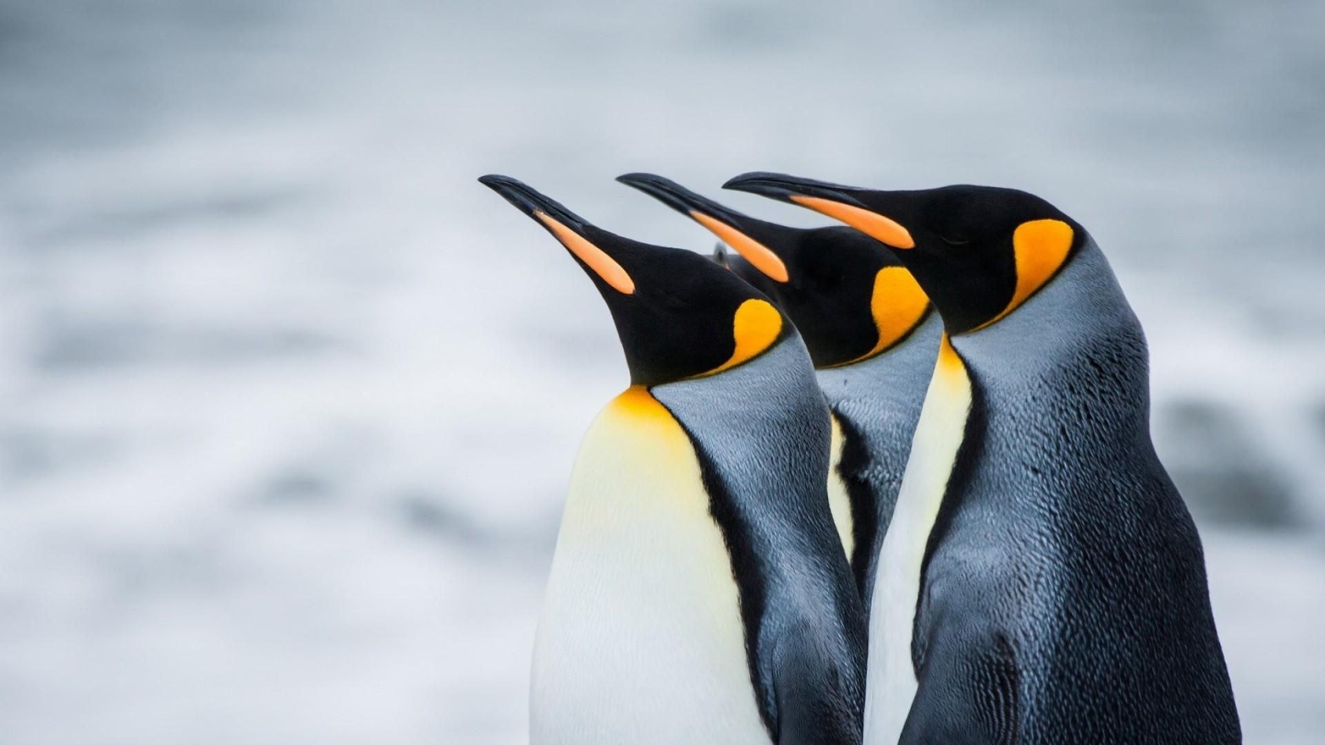 Best 43 Penguin Background on HipWallpaper Christmas Penguin 1920x1080