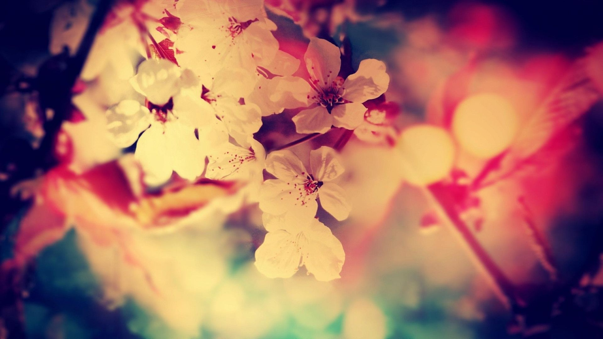 Source From httpwallpapercavecompretty wallpaper for computer 1920x1080