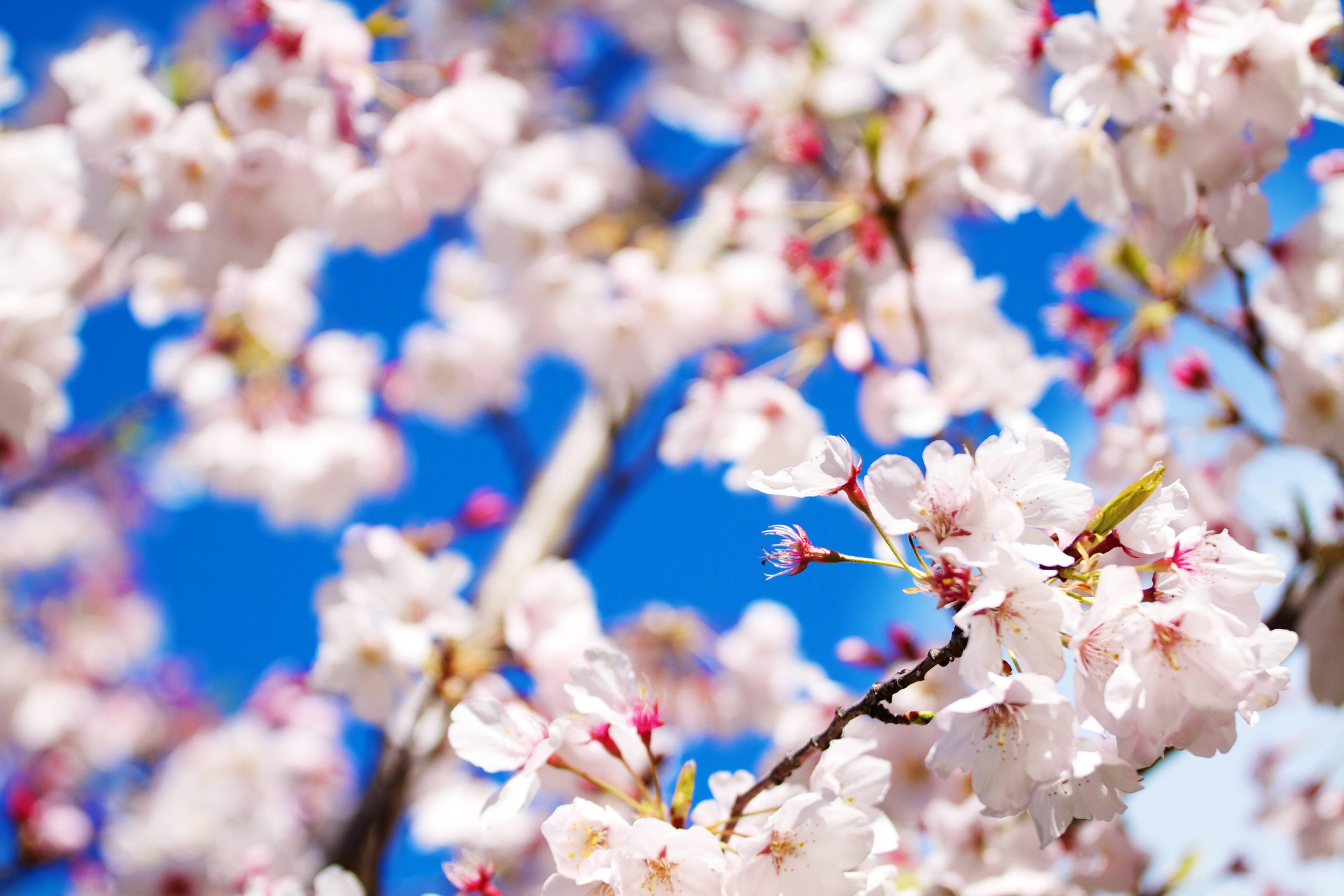 Pretty Flowers Backgrounds [5184x3456