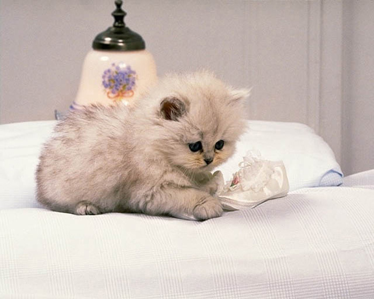 My Top Collection Cute cats wallpapers 4 1280x1024