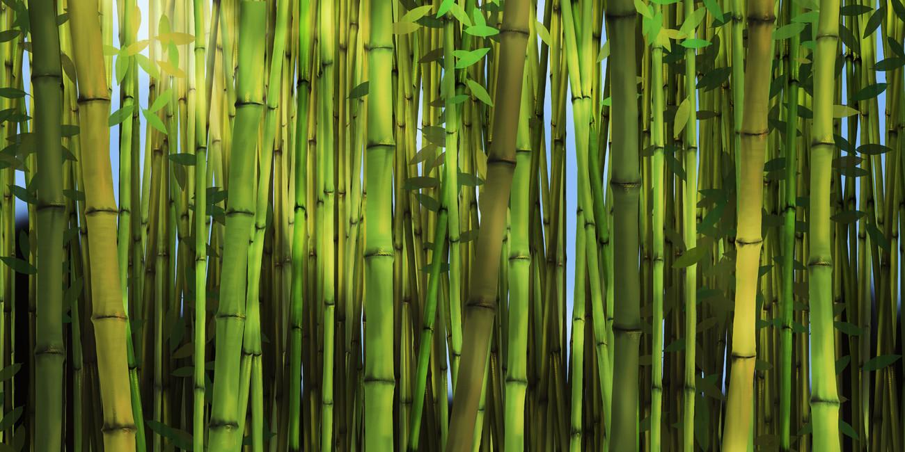 bamboo forest wall mural wallpaper - wallpapersafari