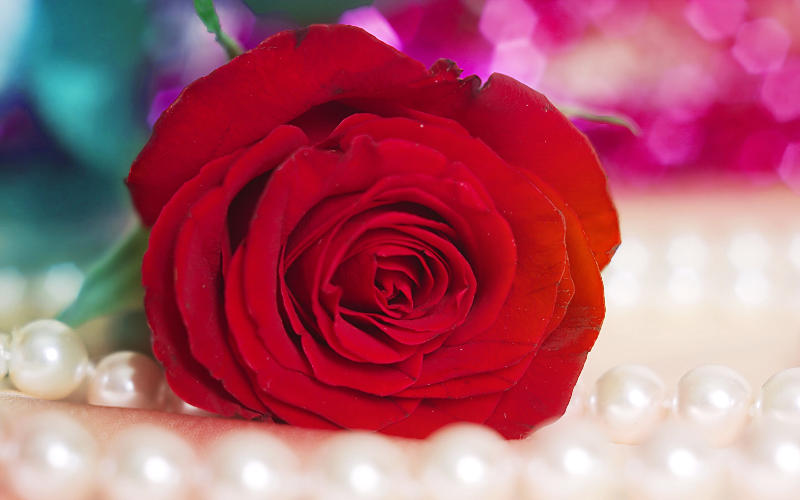 Red Roses Desktop Wallpaper Wallpapersafari