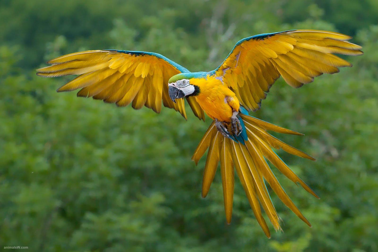 Beautiful Birds Wallpapers   Birds Desktop Wallpapers Wallpaper Zone 1600x1066