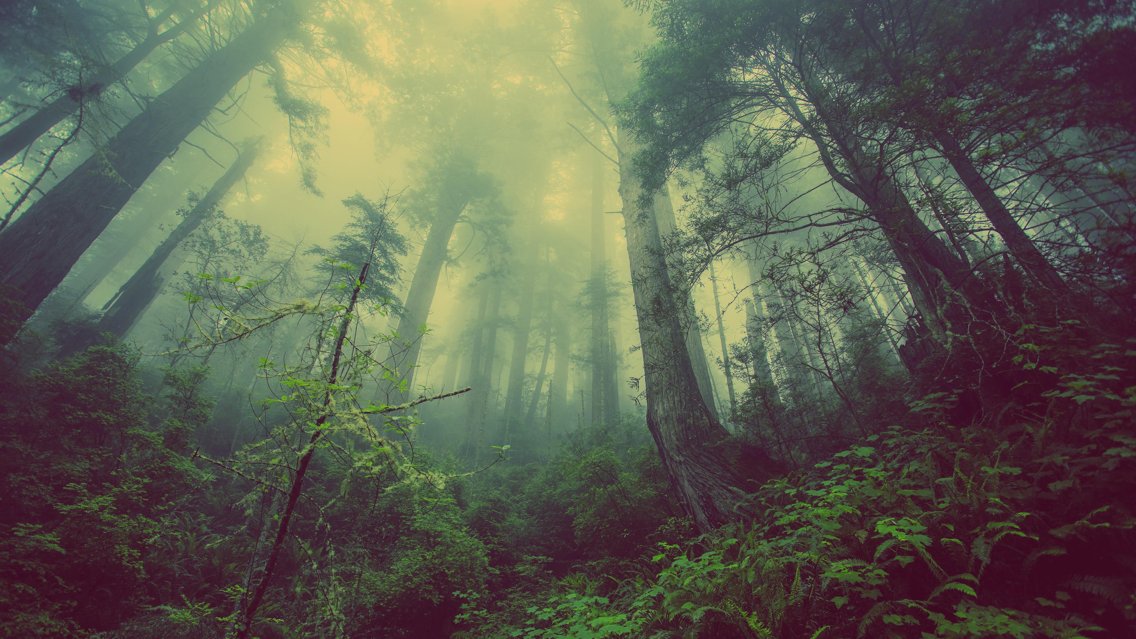 Deep Hazy Forest Wallpaper 3840x2160 ID57643 3840x2160