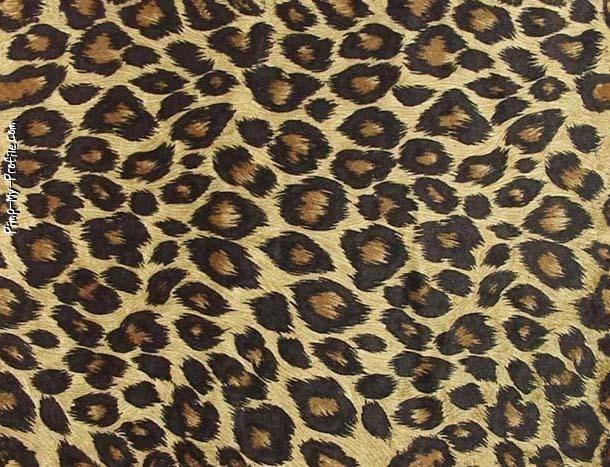 Cute Cheetah Print Wallpapers - WallpaperSafari