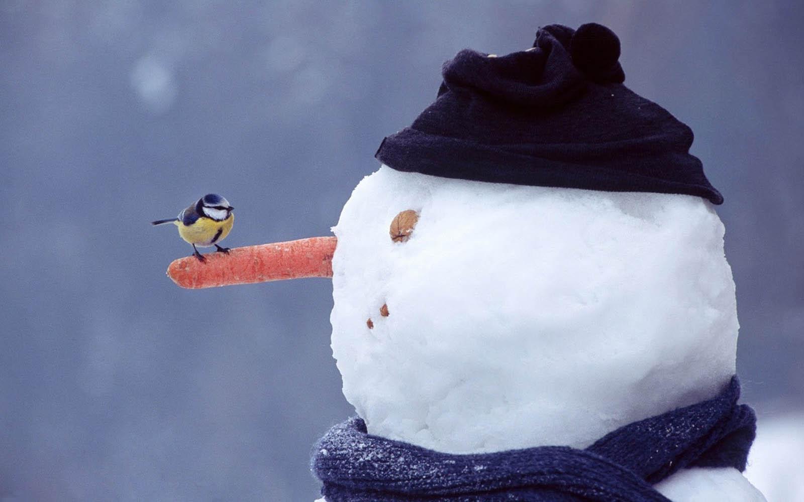 72] Snowmen Wallpapers on WallpaperSafari 1600x1000