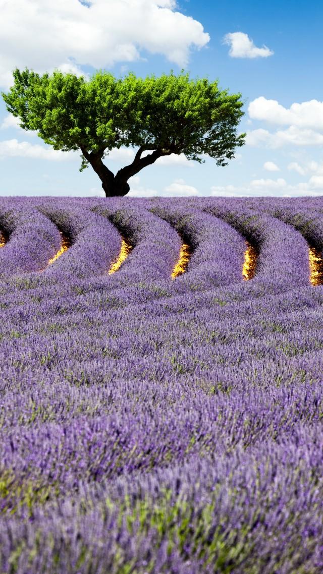Wallpaper Lavender field 4k HD wallpaper Provence France 640x1138