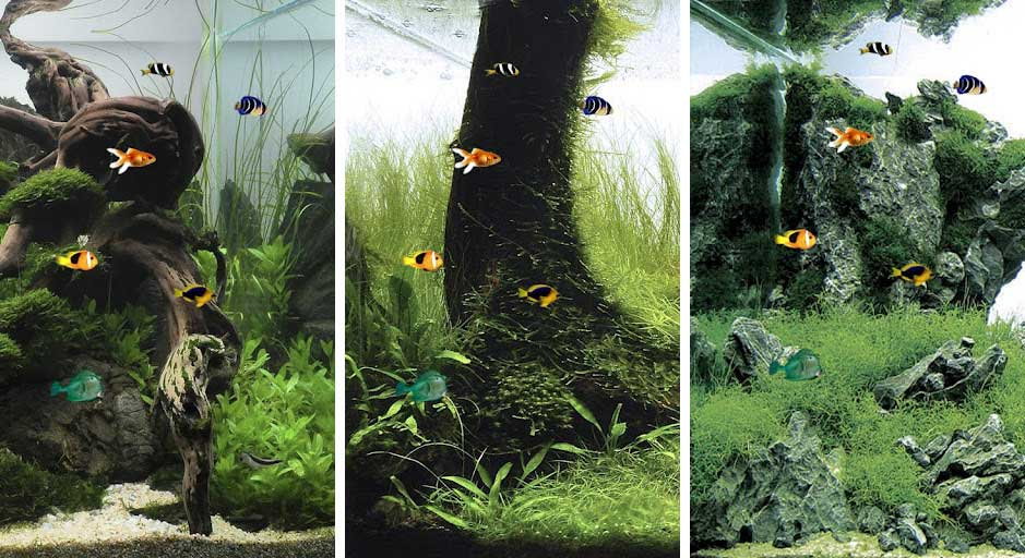 Best aquarium and fish live wallpapers for Android   Android Authority 939x512