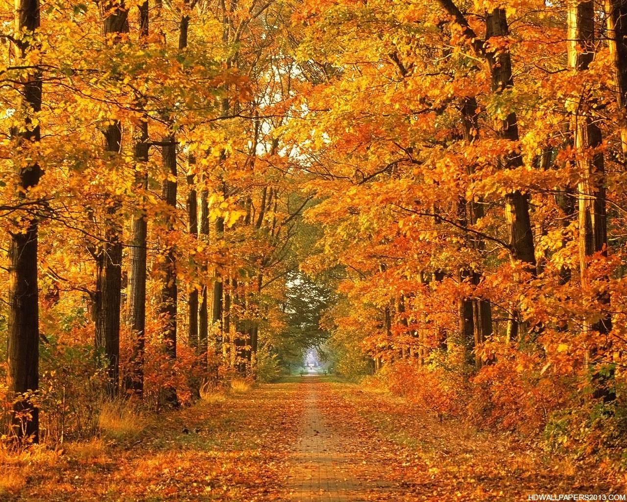 Autumn Wallpaper HD High Definition Wallpapers High 1280x1024