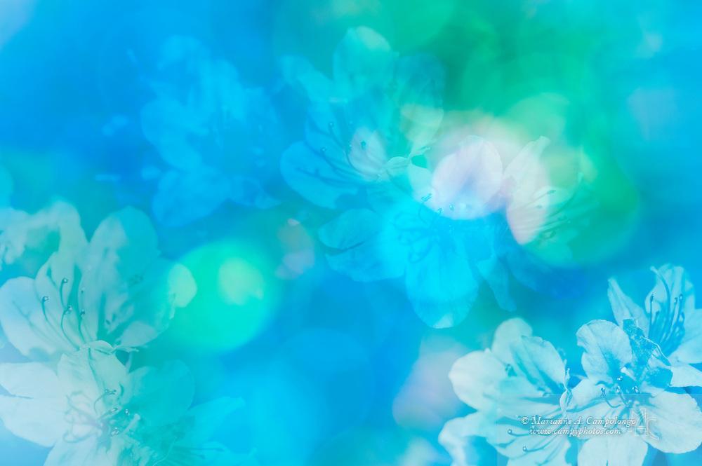 Aqua Blue Wallpaper Wallpapersafari