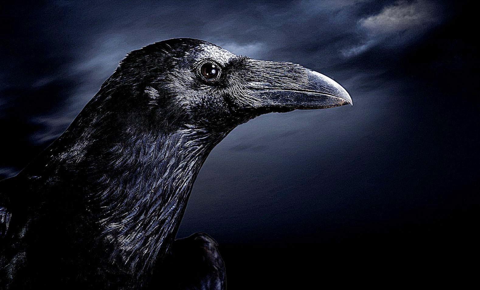 Dark Raven Wallpapers Wallpapers Records 1579x955