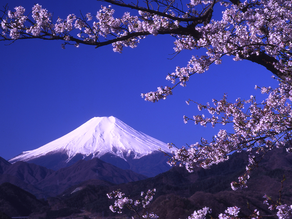 Earth   Mount Fuji Japan Fuji Mountain Flower Wallpaper 1024x768