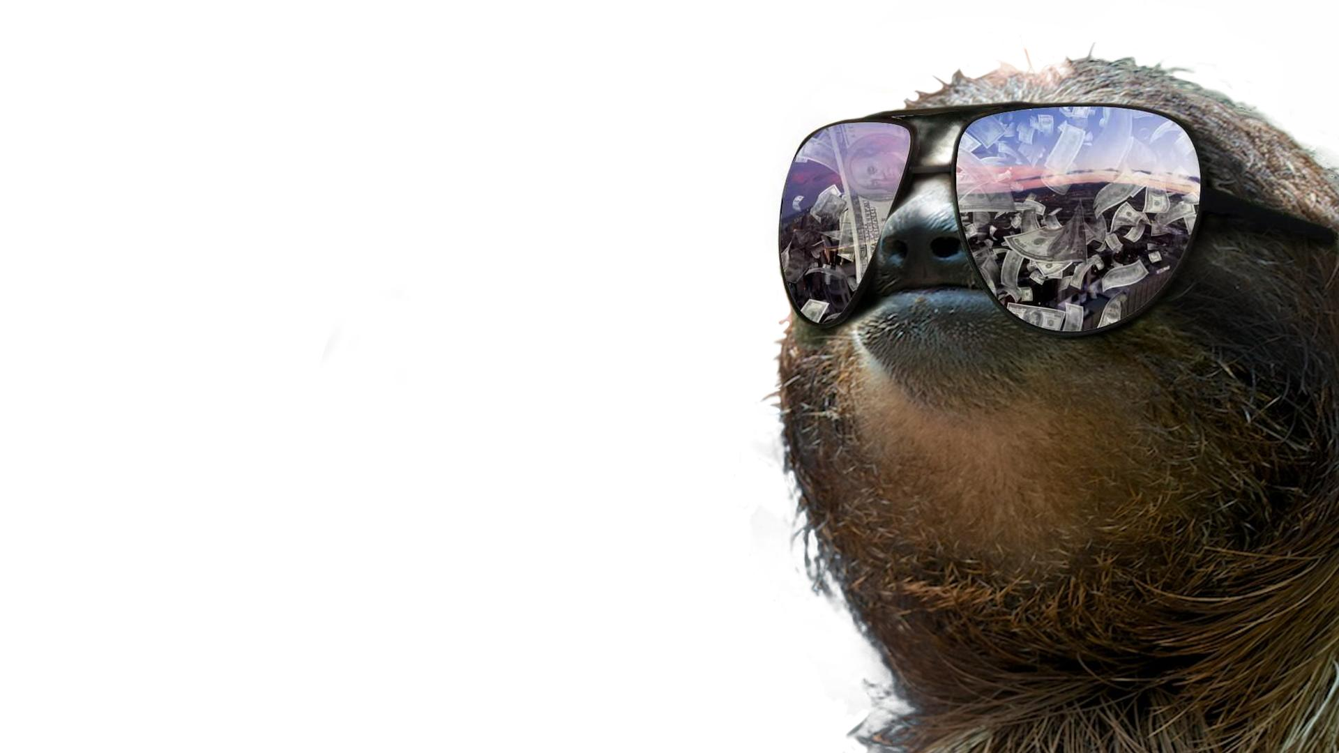 Sloth Wallpapers 1920x1080