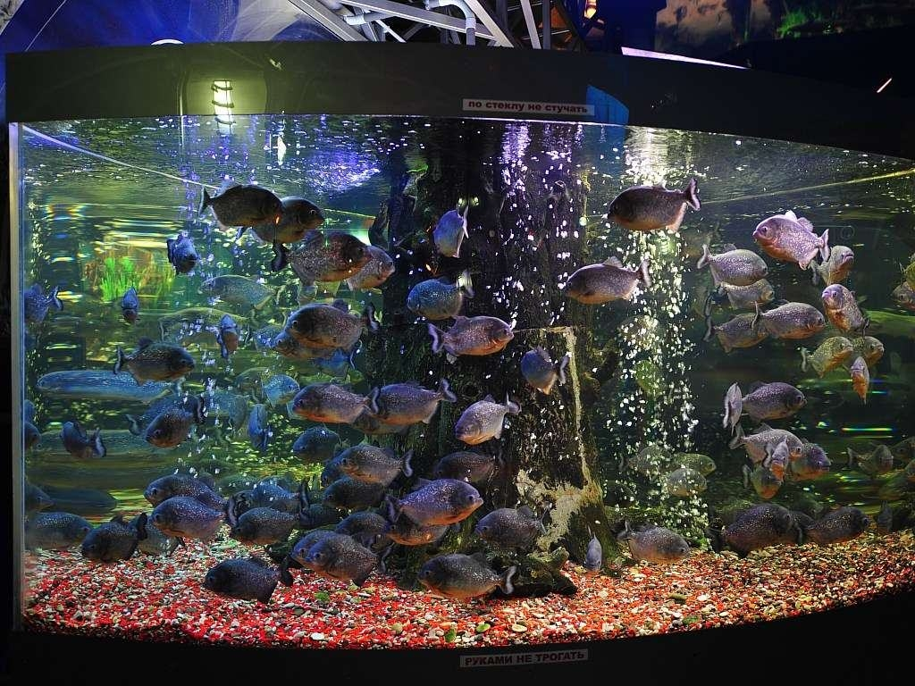 animated aquarium wallpapers HD Wallpapers Backgrounds Aquarium 1024x768