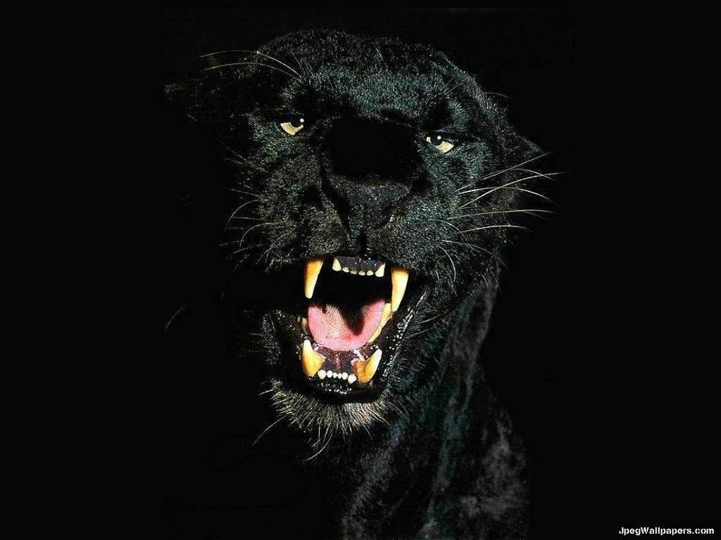 Black Panther wallpaper 1024x768