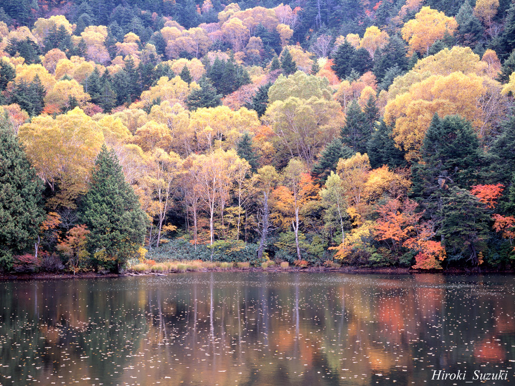Autumn Scenes Wallpaper Images Fun 1024x768