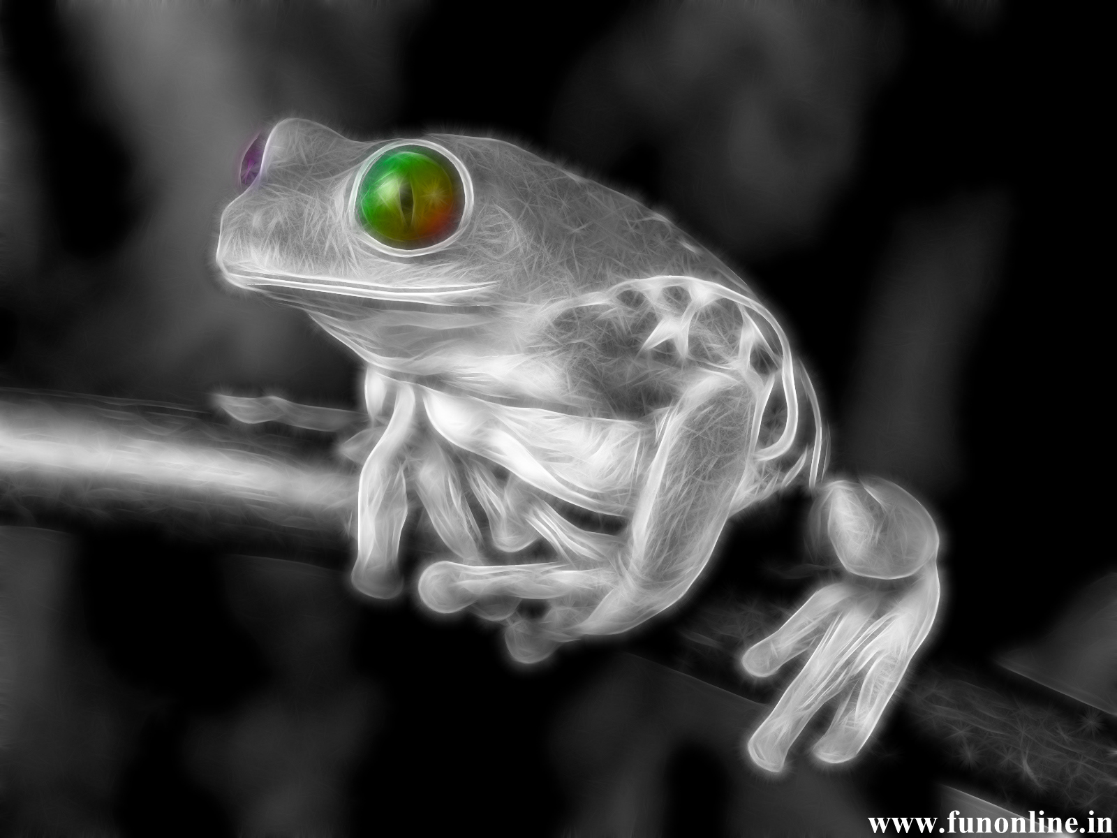 Images Frog His Baby Animals Wallpapers Wallpaper Funny   Doblelolcom 1600x1200