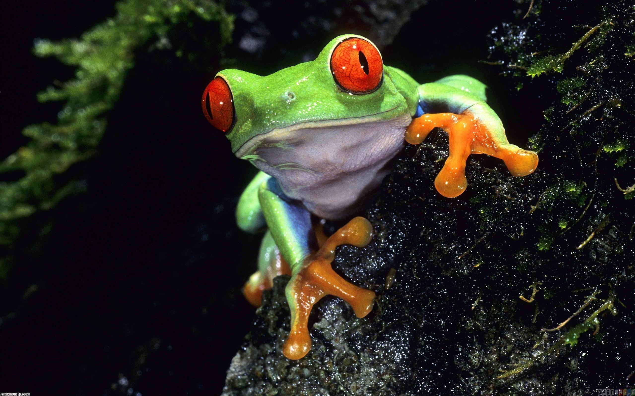 Cute frog wallpaper 17816   Open Walls 2559x1599