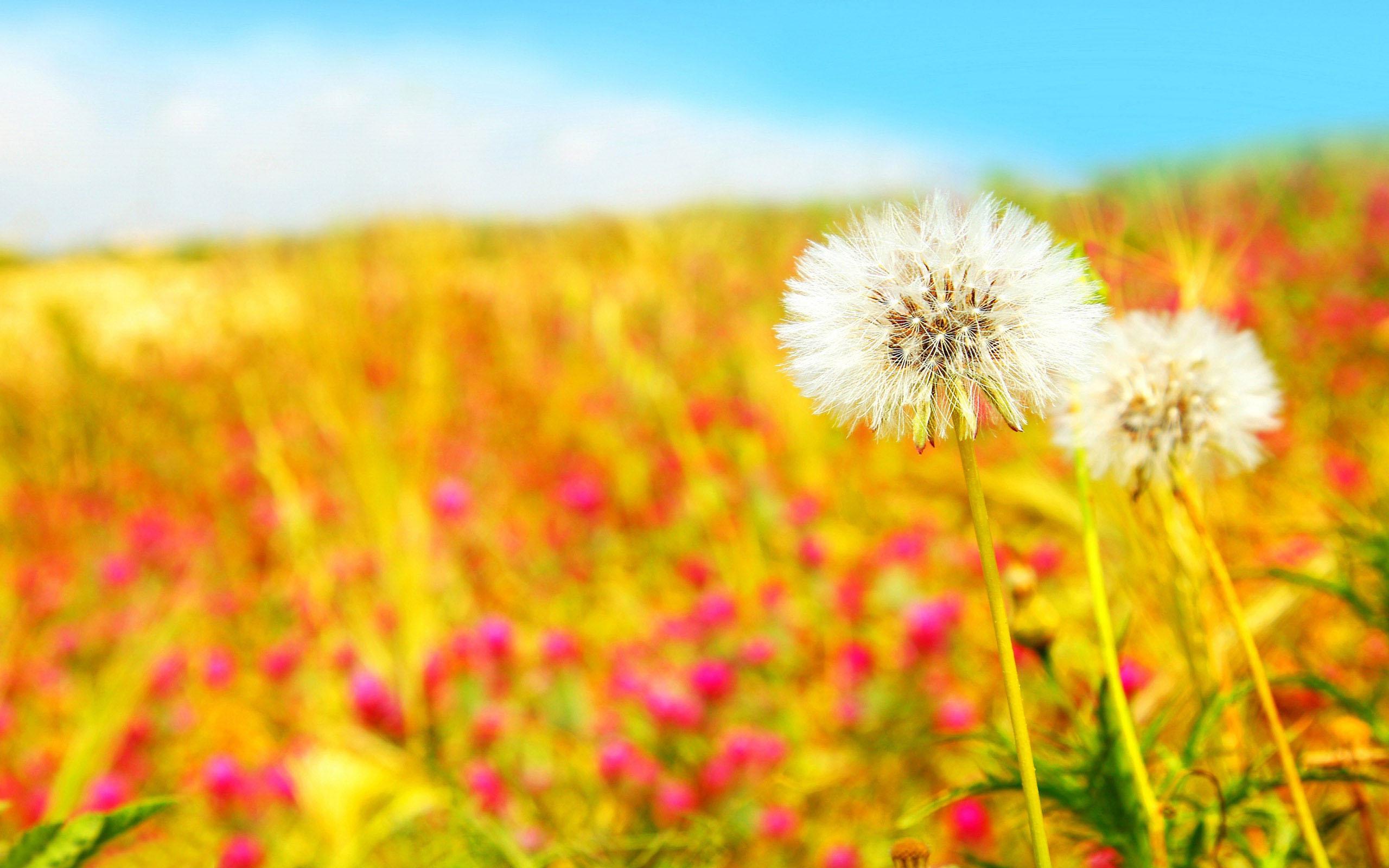 Cute Summer Backgrounds Hd Backgrounds 5 High Wallpaperizcom 2560x1600